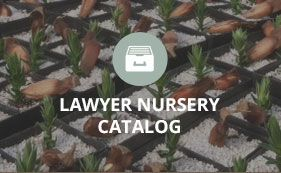 Pin By Erik Morosky On Seed Companys Whole Nursery