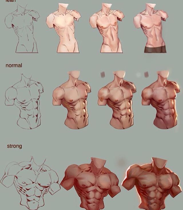 Male Torso Reference Yes I Know That The Normal Body