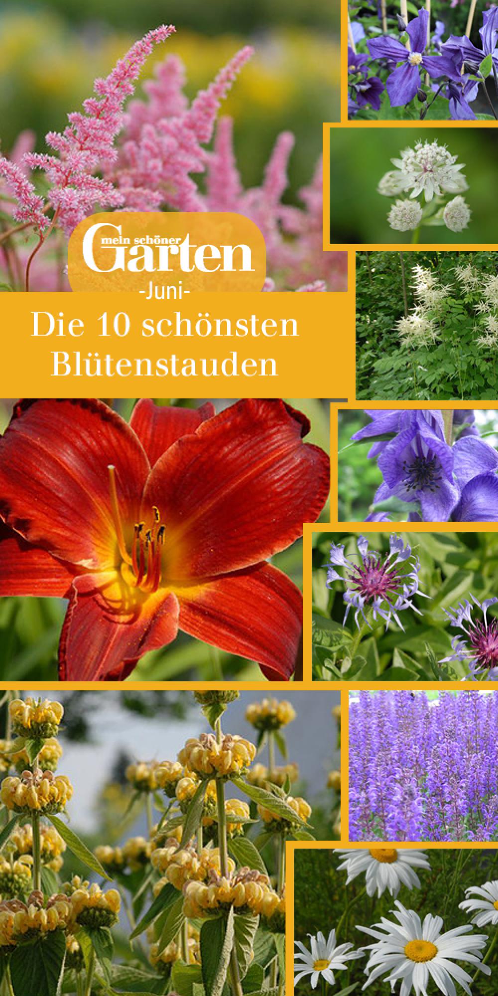 Die 10 schönsten Blütenstauden im Juni | Stauden, Schöne gärten ...