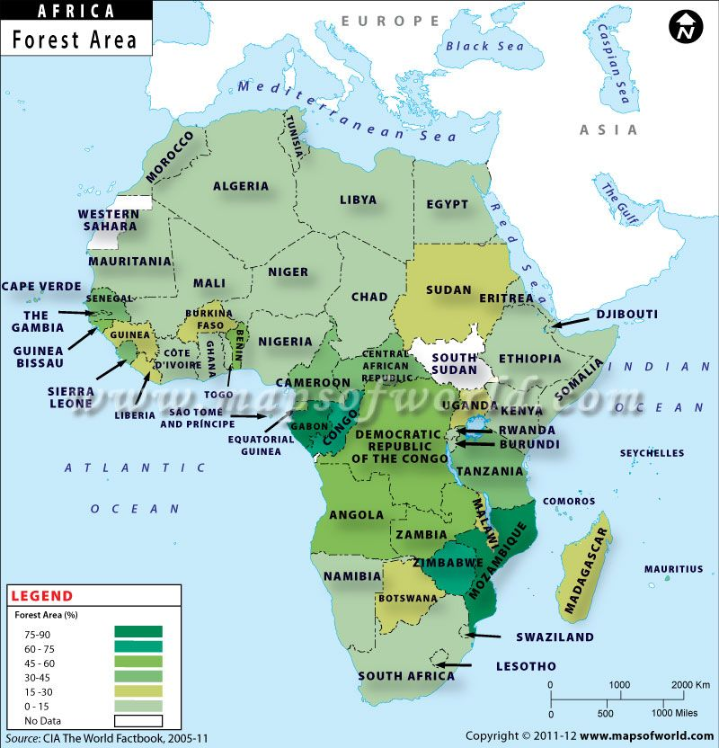 Africa is known for its beautiful forest and biodiversity. Which