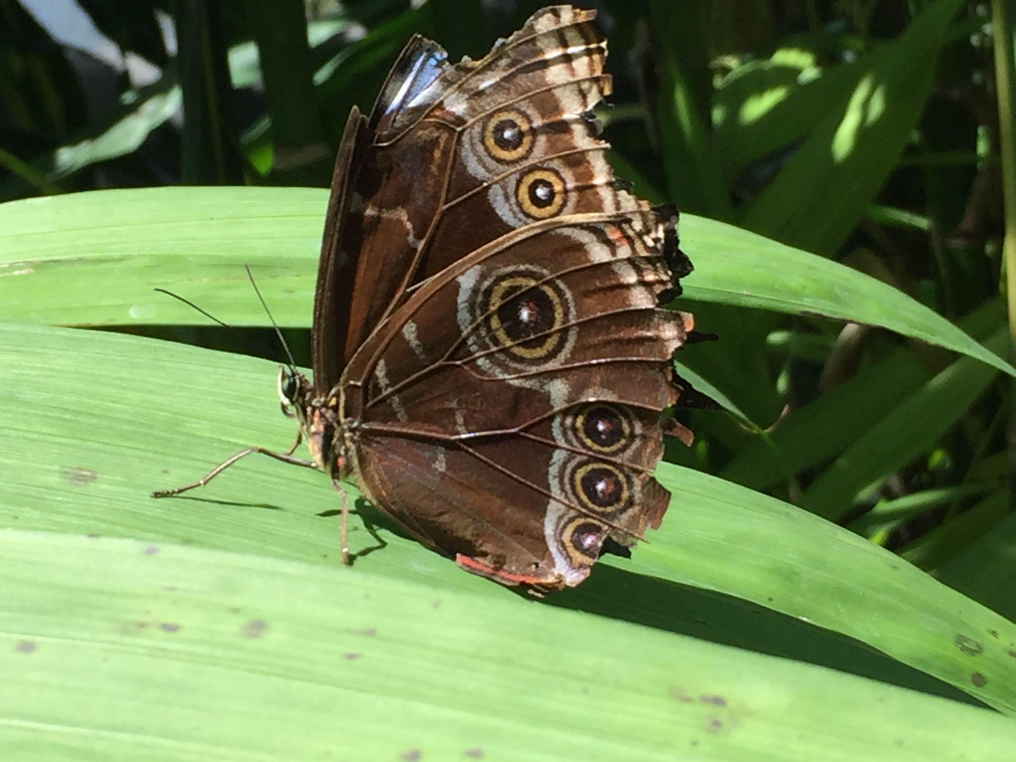 Fort Worth Botanical Gardens Butterfly Exhibit