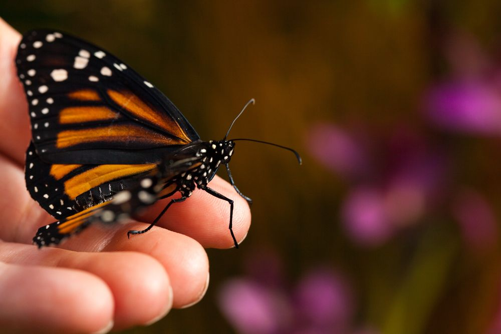 In this course, you'll learn the secrets to creating a garden, patio, balcony, or backyard that welcomes birds, butterflies, and other beneficial insects.