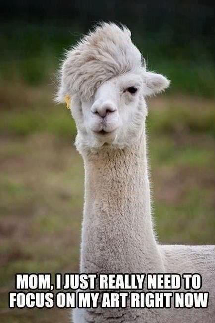 Emo Alpaca Funny Animal Pictures Animal Captions Bones Funny