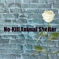 At first thought, a no-kill animal shelter seems clear enough, and a worthy goal for your community animal shelter. Only upon delving deeper is...