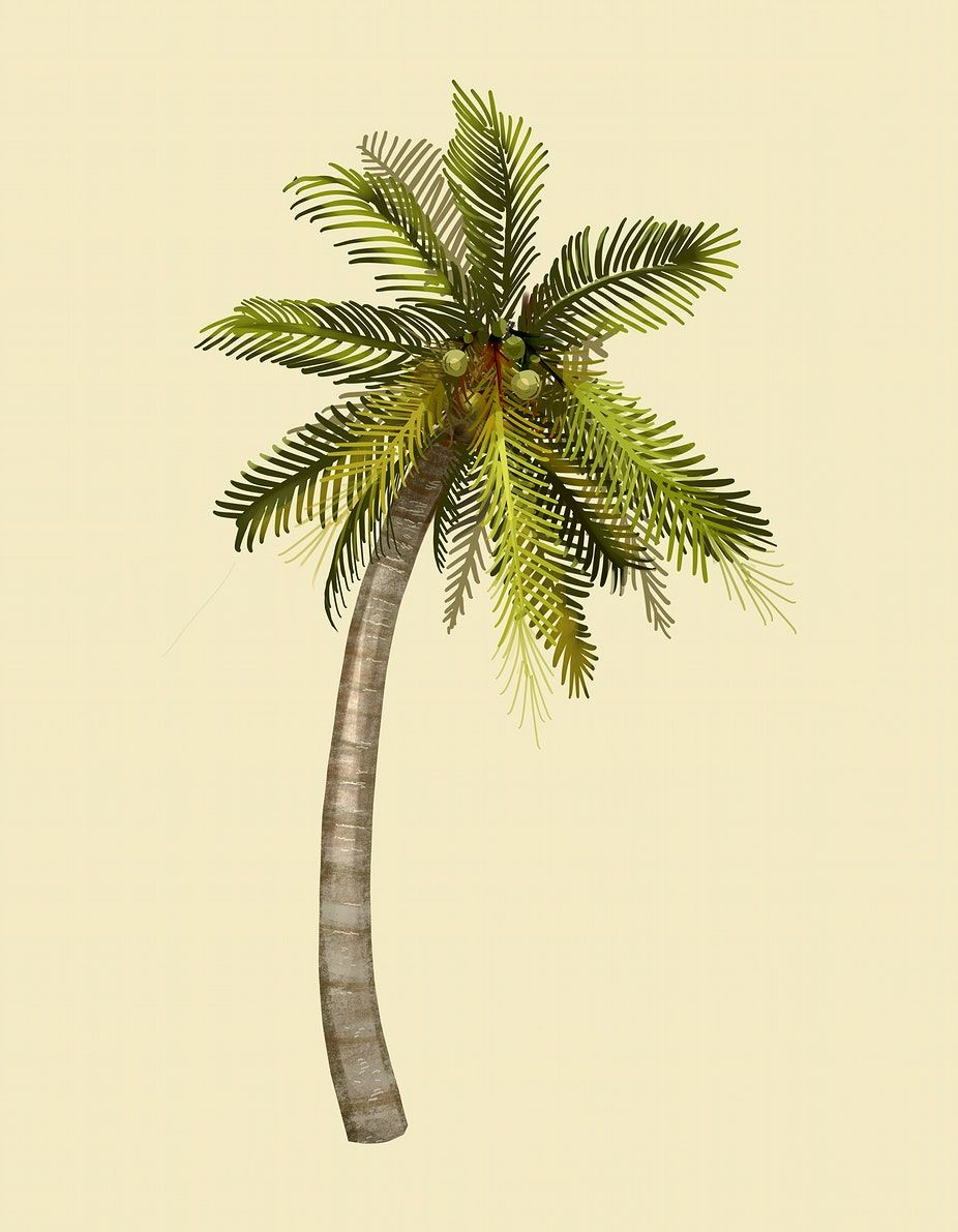 Download Premium Illustration Of Tropical Coconut Palm Tree