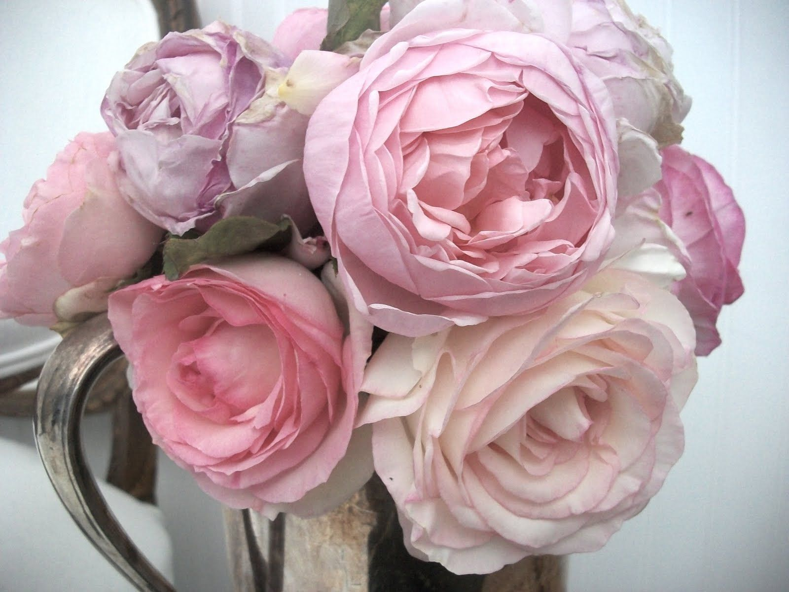 Cabbage roses and peonies bouquet google search pale pink and cabbage roses and peonies bouquet google search nvjuhfo Gallery