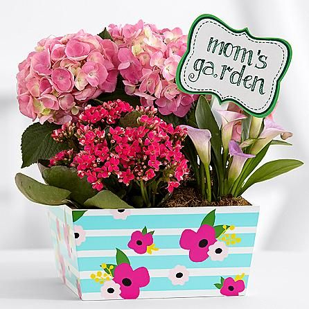 """Pro Flowers ~ Mom's Pink Flowering Market Garden $59.99 ~   •2 pink hydrangea •One pink mini calla lily •One pink kalanchoe OR one pink lisianthus plant •Colors of flowers may vary •Includes 8"""" wide wooden decorative box with French Script •Includes """"mom's garden"""" stake •Includes care instructions •Item #30142020  Shop @ www.proflowers.com"""