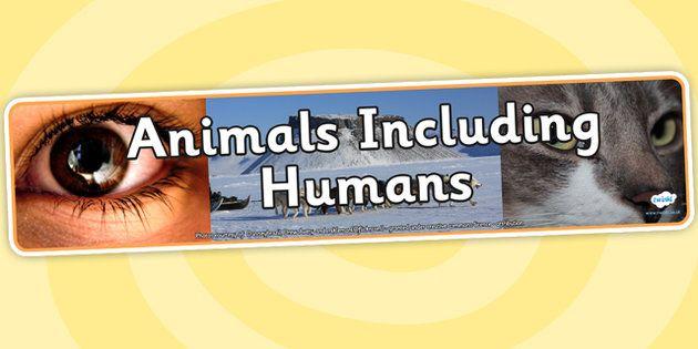 Image result for animals including humans banner