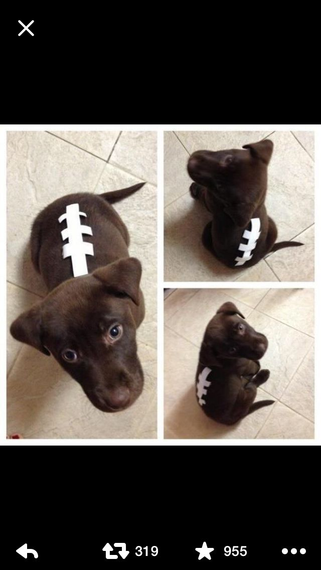chocolate lab halloween costume - Halloween Costumes For Labradors