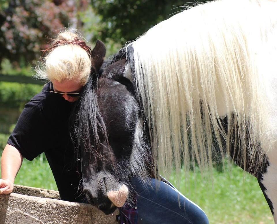 Gypsy Vanner mare....LOVE