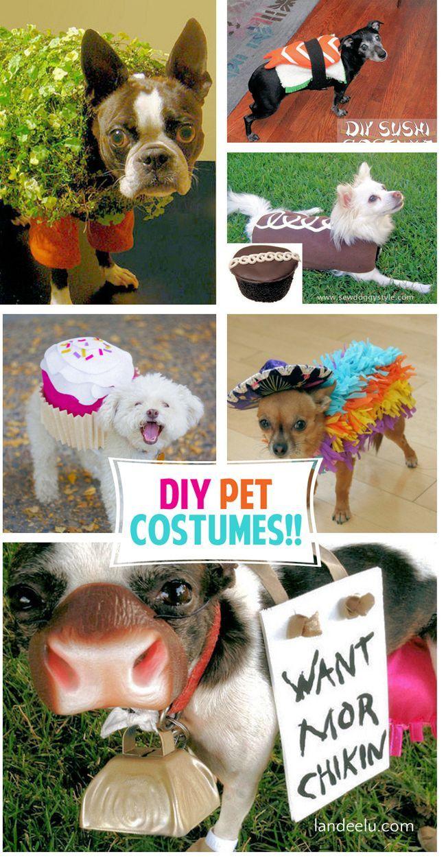 Adorable DIY Pet Costumes Diy dog costumes, Pet