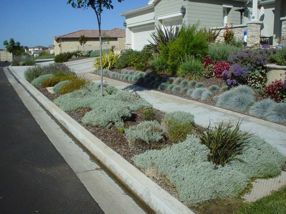 matching xeriscaped parking strip and front yard  separted only by the sidewalk