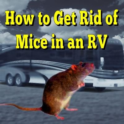 How Do I Get Rid Of The Mice In My Rv Rv Trailers Rv Camping