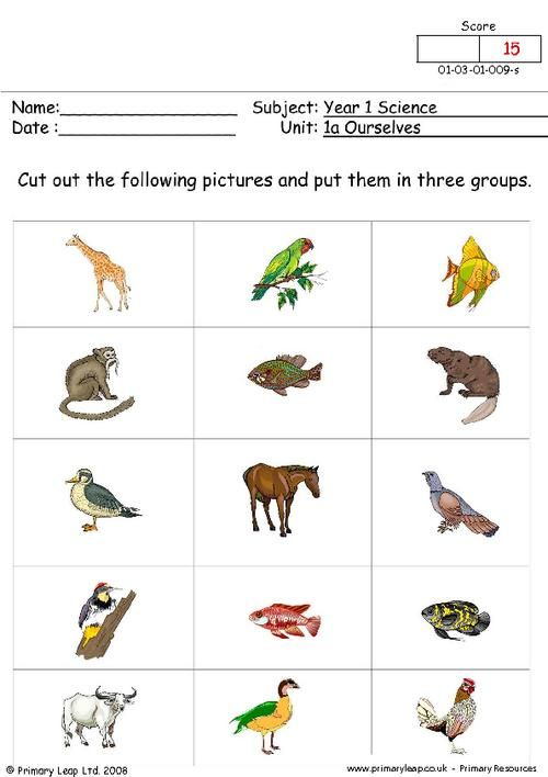 Printables Animal Science Worksheets animal categories animals classification science primaryleap co uk groups worksheet