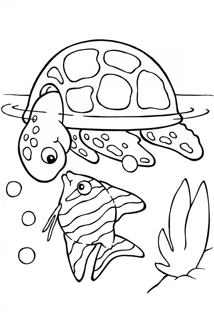 httpcoloringscosea turtle coloring pages - Sea Turtle Coloring Pages