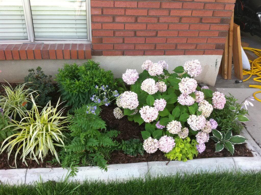 Endless Summer Hydrangea: Winter   Yard Envy   Pinterest   Hydrangea