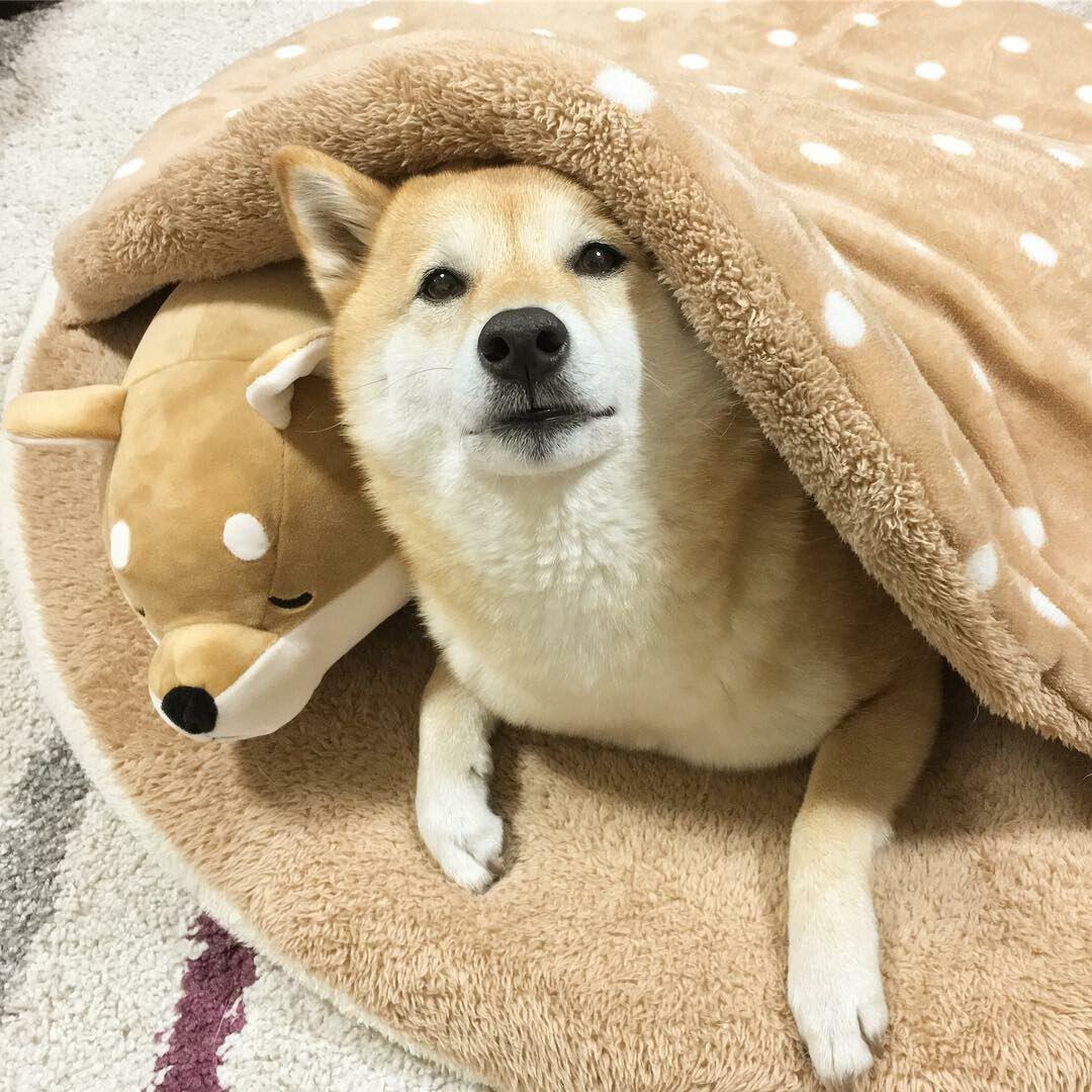 Картинки мемов про собак