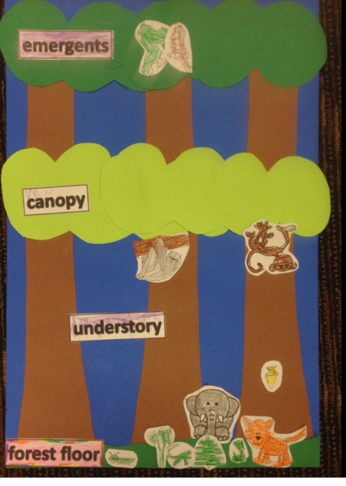 Pin On Rainforest Tropics Classroom