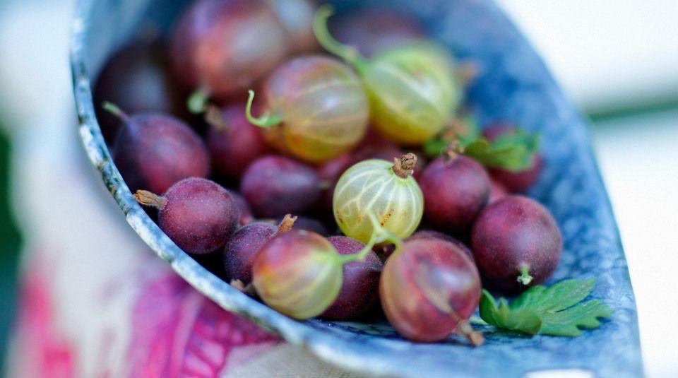 Stachelbeeren-Rezepte   Küchengötter   Sammlung: Rezepte satt ...