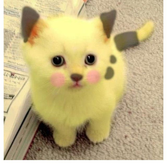 pikachu kitty wishes pinterest kittens cats and cute cats