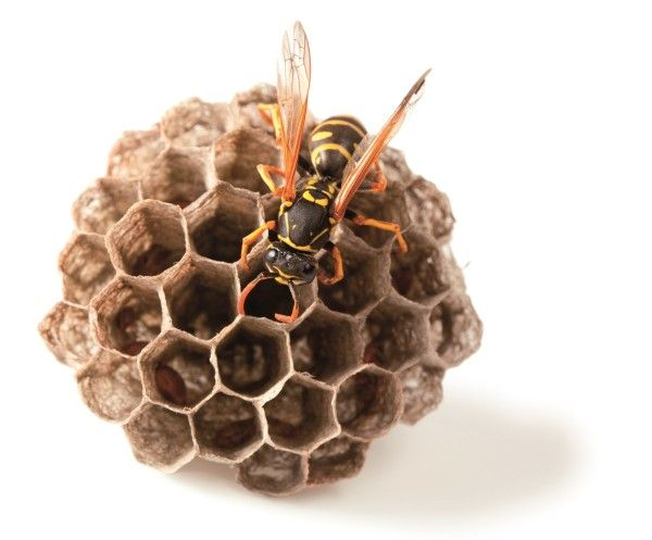 b00f62607494d82c3e9e26de50e0ee77 - How To Get Rid Of Wasps In A Stone Wall