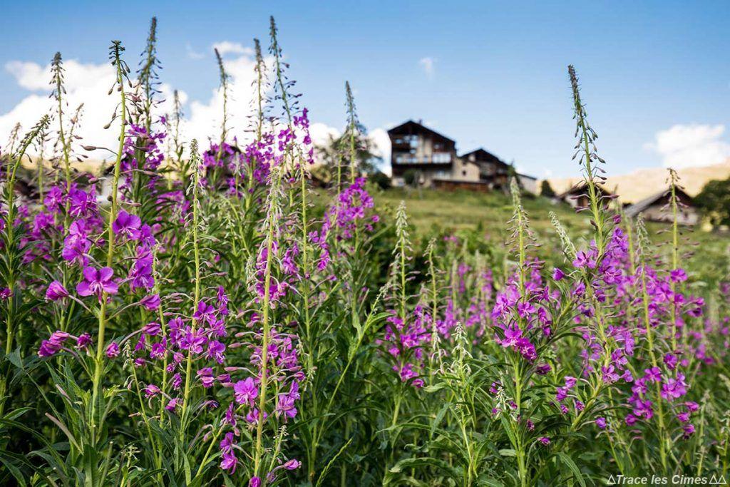 Guide Noms De Fleurs De Montagne A Voir En Randonnee Blog Outdoor Trace Les Cimes Fleurs De Montagne Queyras Noms De Fleurs