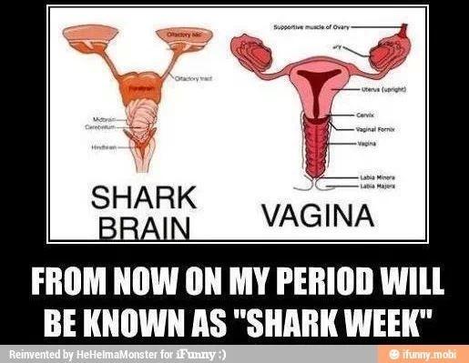 For Jill!!! Shark brain vs female reproductive system | Things to ponder | Pinterest | Funny ...