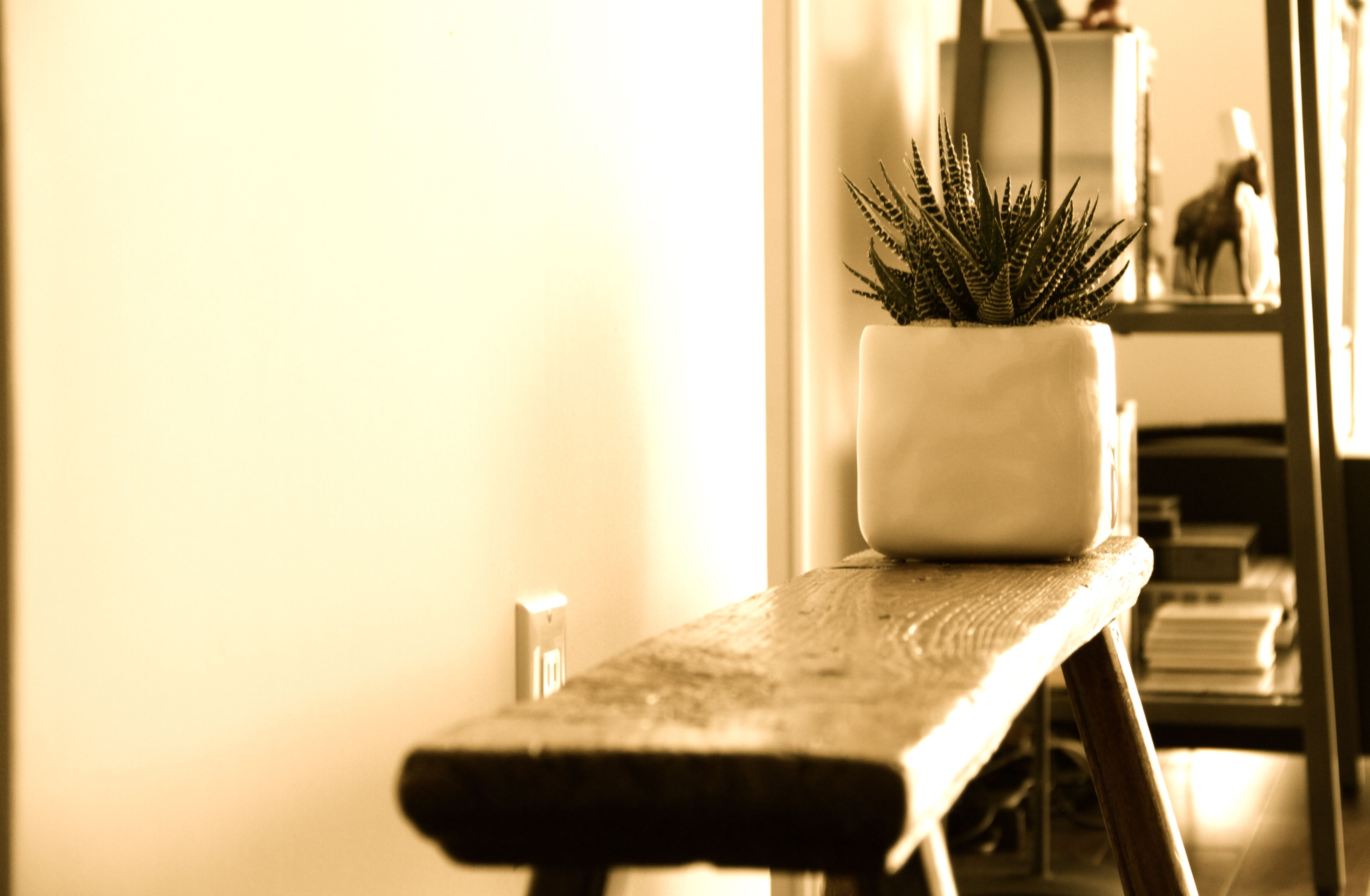 Bench and succulent!