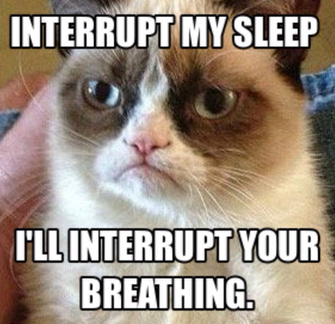 In Other Words I Ll Kill You In Your Sleep Grumpy Cat Quotes Funny Grumpy Cat Memes Grumpy Cat Humor
