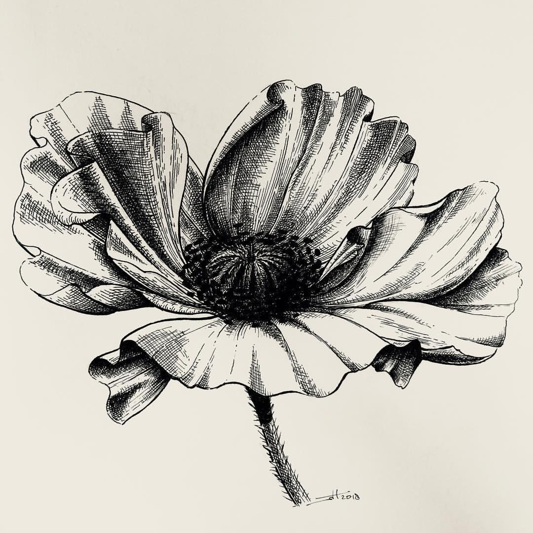 Stippled Flowers Pen Drawing By Jenny Barton Stippling In