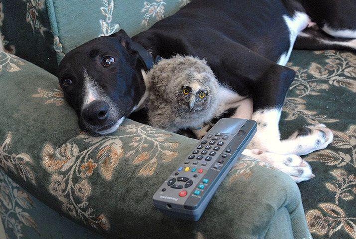 Unlikely Animal Friendships In Pictures Mit Bildern