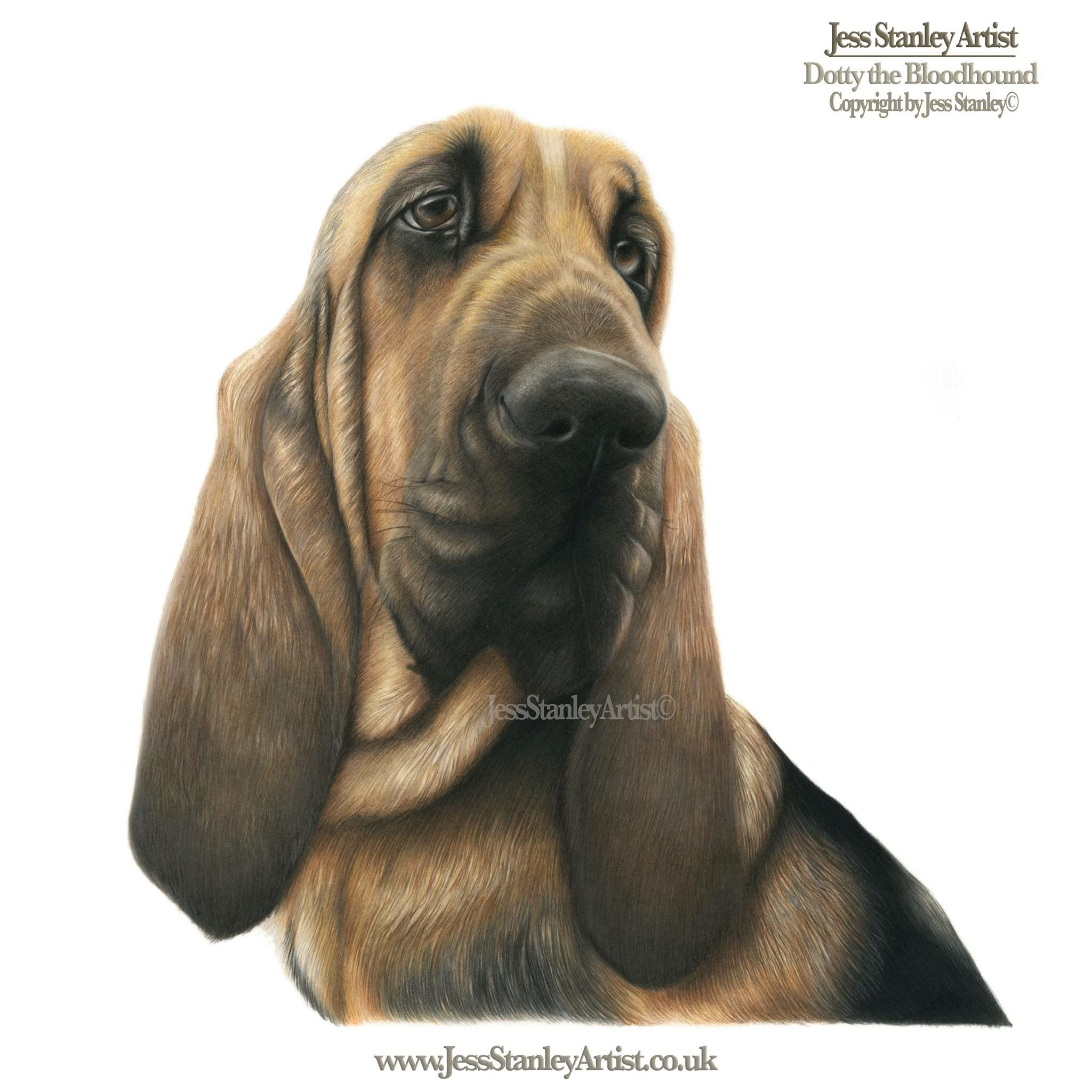 Dotty the bloodhound by jess stanley artist in coloured