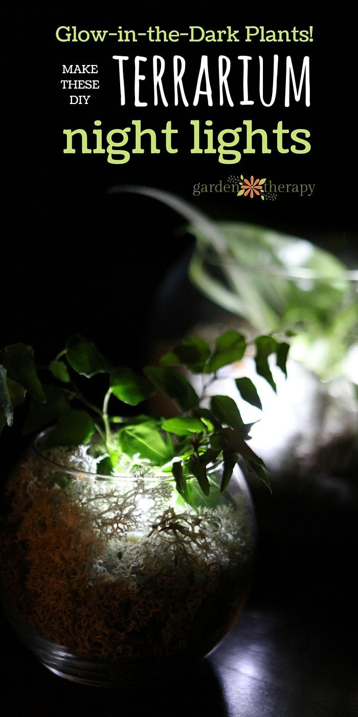 Terrarium night lights gardens glow and night