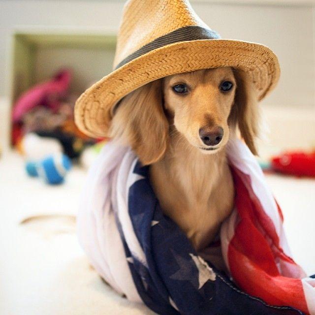 Patriotic Pup // via musingsofmia