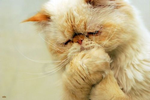 Even cats get sad every now and then. :)
