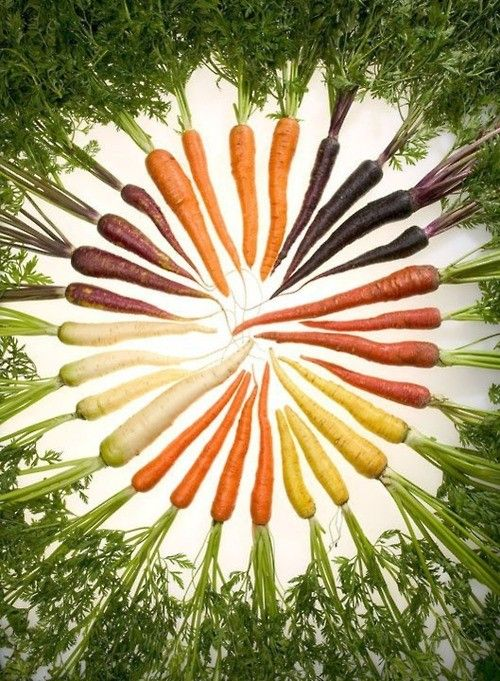 #carrot #colorful