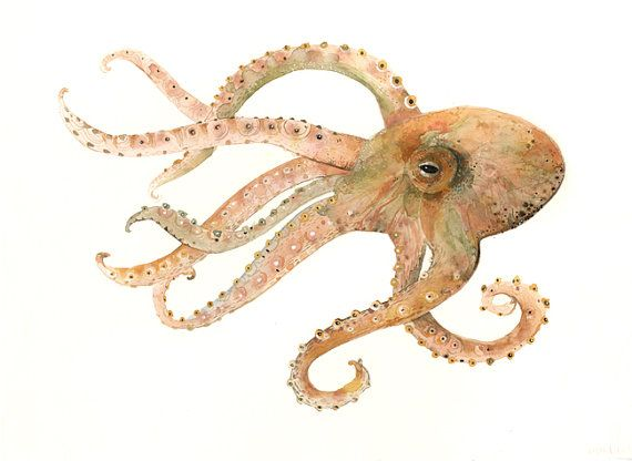Octopus no. 2 Large Archival print of Watercolor by amberalexander