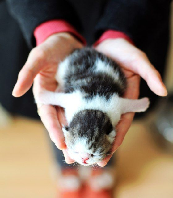 Sweet Ball of Cute  At four days old, this teeny bitty one hasn't opened her eyes yet, but she is ready to take the world by storm with her head exploding cuteness. I am flying!