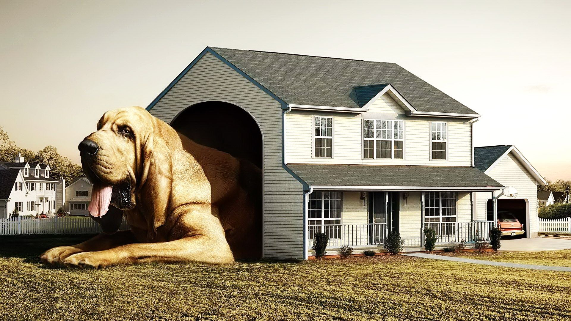 Awesome and Cool Dog Houses Ideas: Interesting Houses Row Old Levels ...