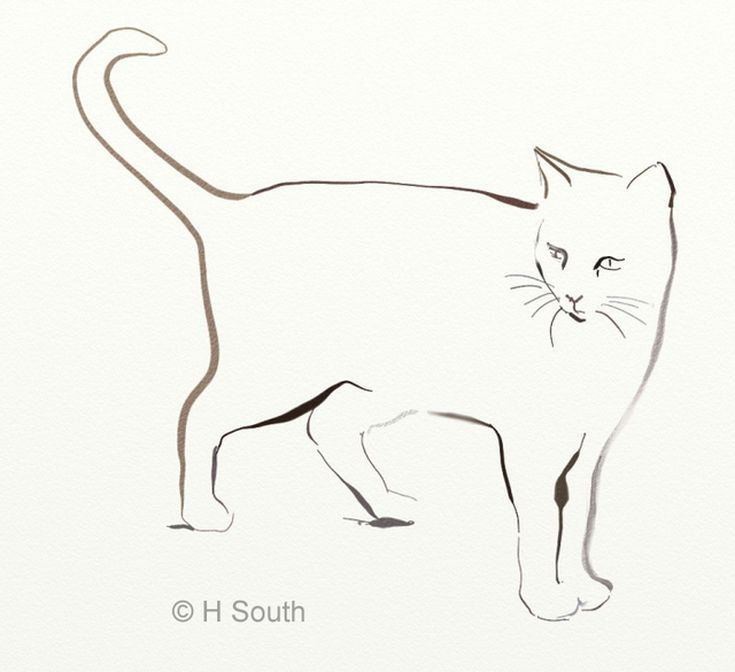 your guide to drawing and sketching cats projects to try