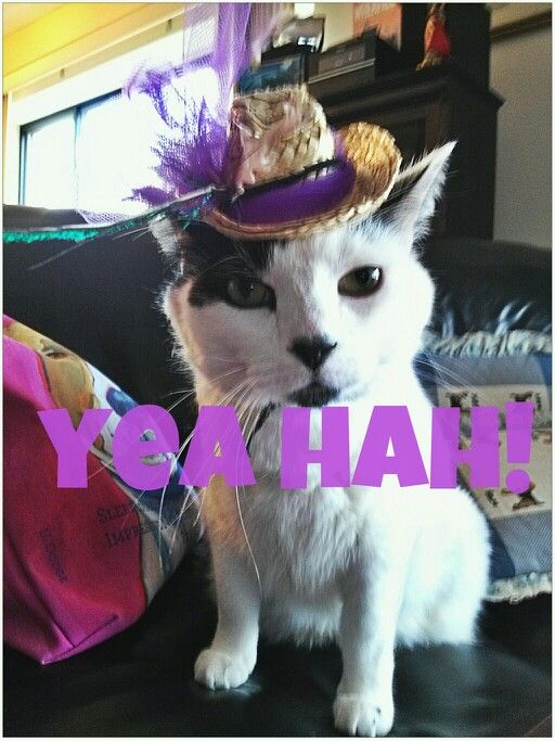 Silly kitty  Silly  Pinterest  Kitty
