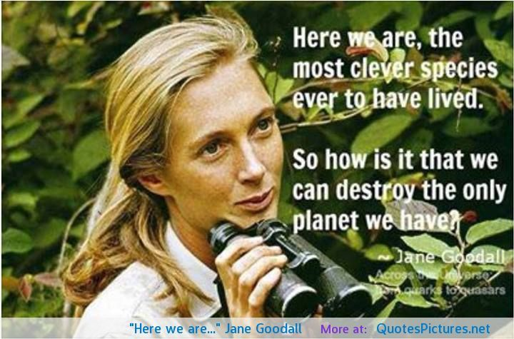 Jane Goodall Quotes Awesome Jane Goodall Quotes  Google Search  School Ideas  Pinterest