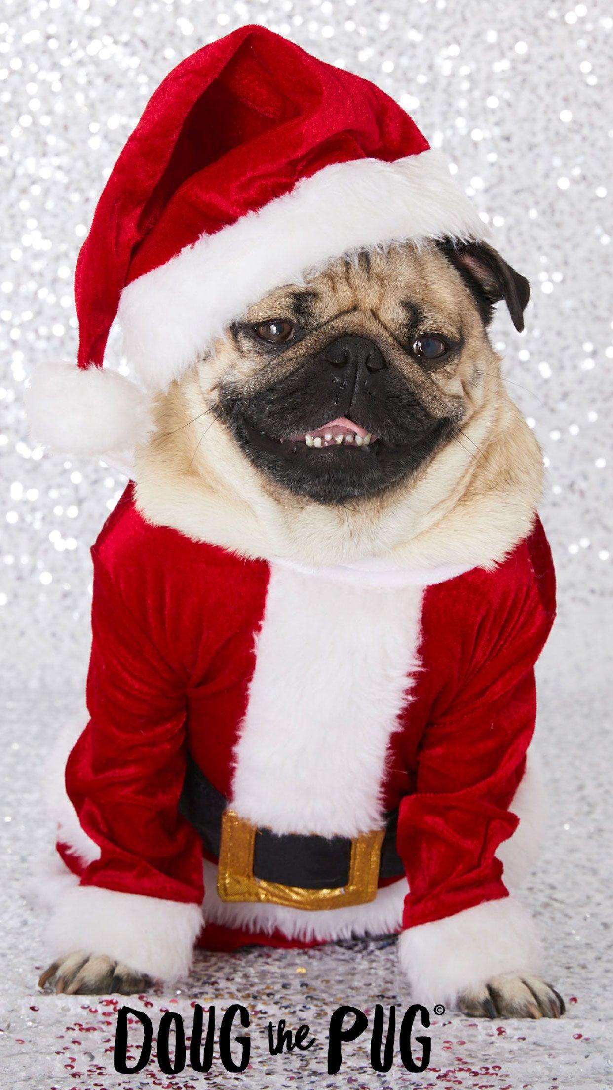 Free Doug The Pug Christmas Wallpapers Clairesblog Pug Christmas Holiday Iphone Wallpaper Wallpaper Iphone Christmas