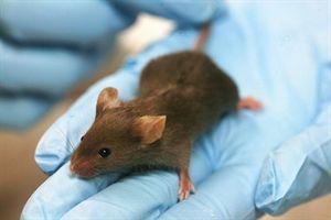 Un nuevo fármaco mejora de la memoria en ratones con Alzheimer