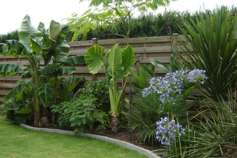 Jardin Exotique Jardin Exotique Jardin Tropical Modele De Jardin