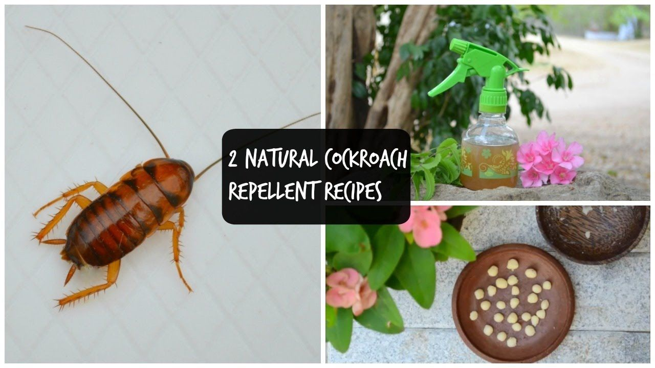2 natural remedies to get rid of cockroaches in kitchen