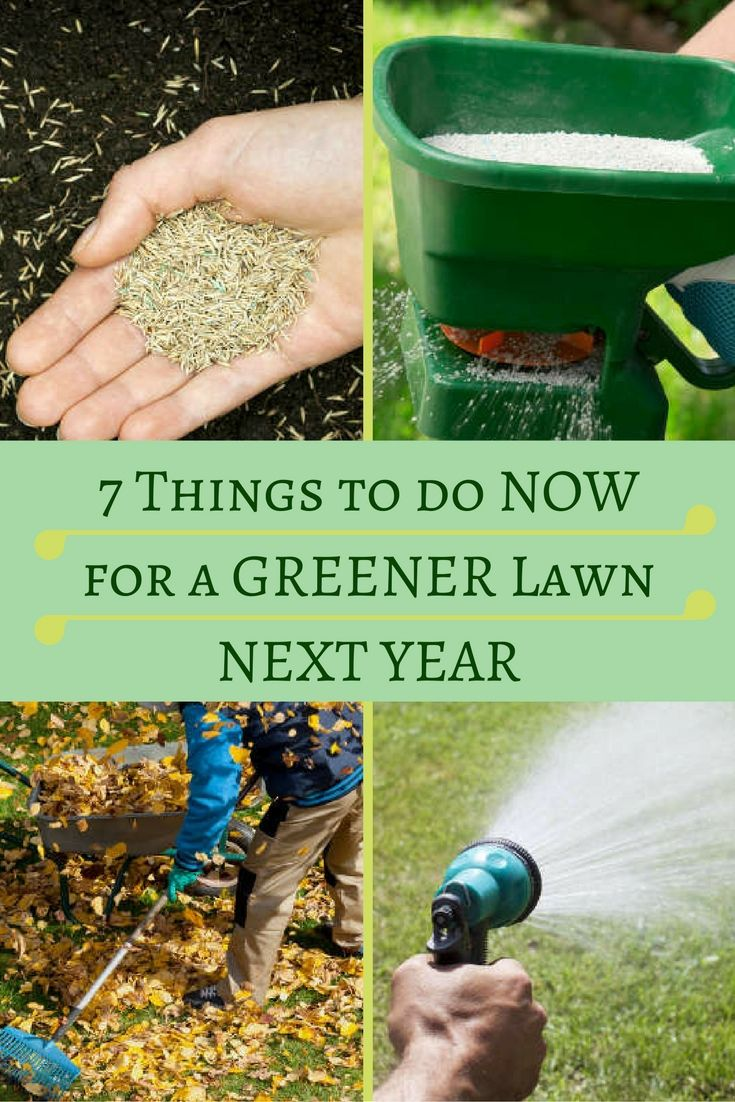 7 things to do now for a greener lawn next year fall