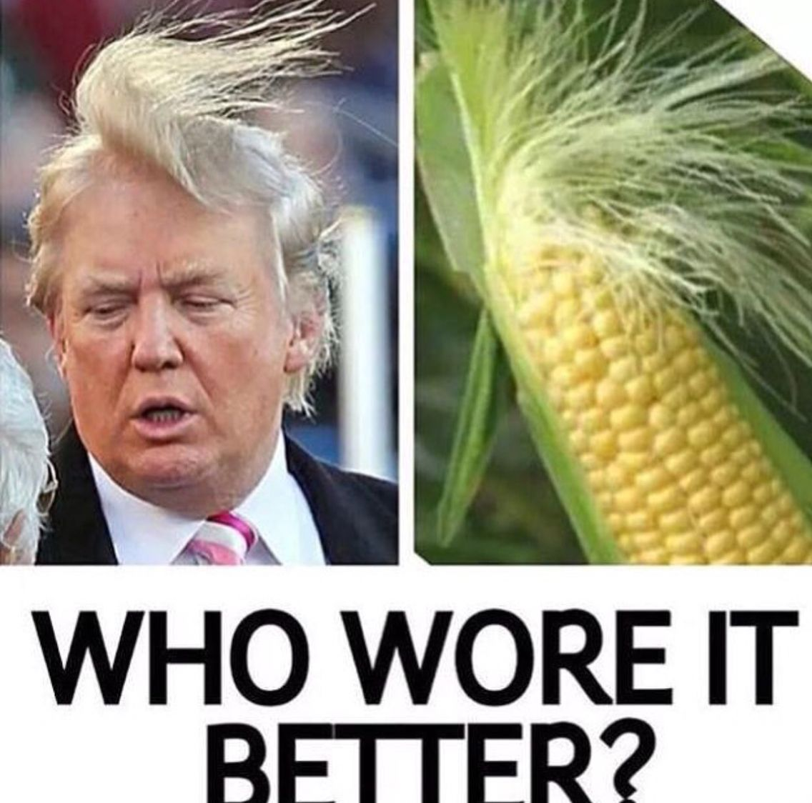 Funny Donald Trump Quotes Definitely The Cob  Things That Make Me Laugh  Pinterest