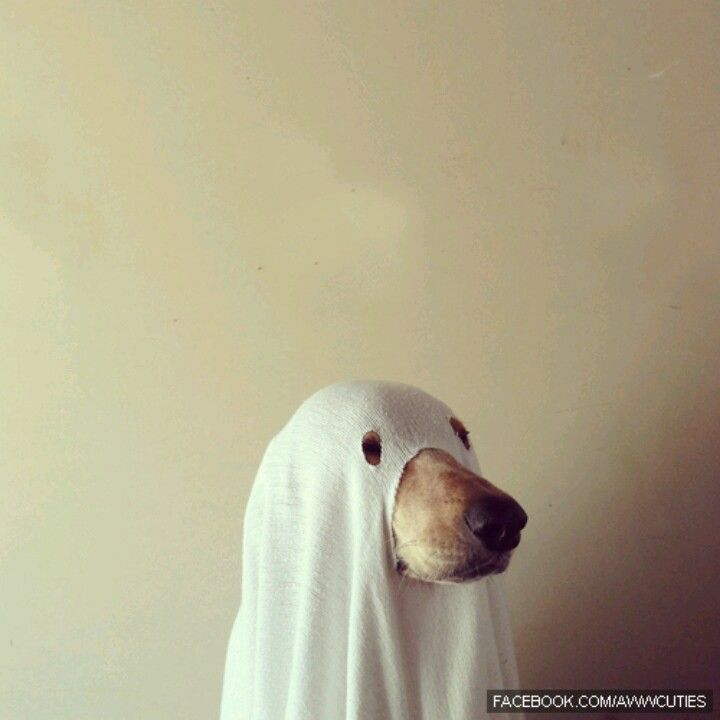 Ghost Lab Halloween Costumes To Make Ghost Dog Homemade