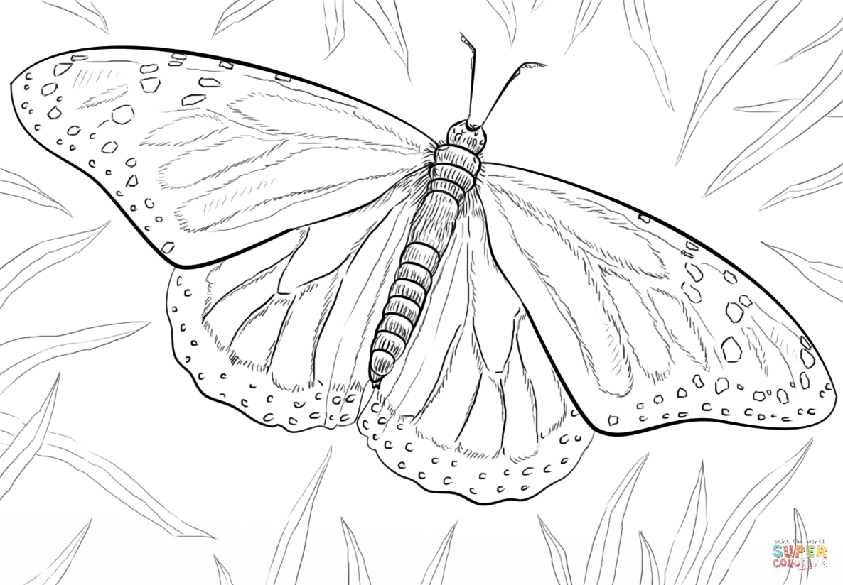 Monarch Butterfly Super Coloring Monarch Butterflies Art Butterfly Sketch Butterfly Coloring Page